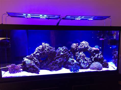 220 Gallons of Pure Awesome | REEF2REEF Saltwater and Reef