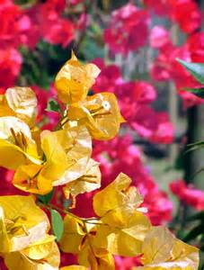 Red Yellow Tropical Flowers