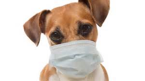 coronavirus covid  affect  pet dog  cat