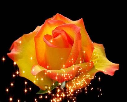 Rose Gifs Animation Animated Roses Orange Flowers