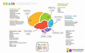 Brain Hierarchy  When Your Child U0026 39 S Lower Brain Levels Are Weak  They Can U2019t Learn