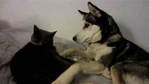 Cat and dog fight then kiss and make up! - YouTube