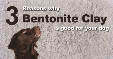 bentonite clay detox dogs naturally magazine