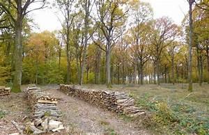 Foret à Bois : le plan for t bois revu et corrig s ouvre la consultation du public ~ Nature-et-papiers.com Idées de Décoration