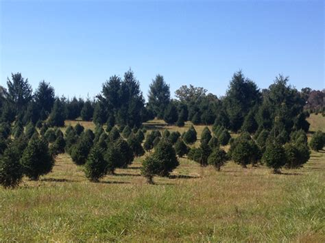 28 best christmas tree farms in northern virginia a