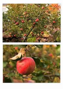 Welche Blumen Blühen Im Oktober : wildes gartengl ck oktober 2013 ~ Bigdaddyawards.com Haus und Dekorationen