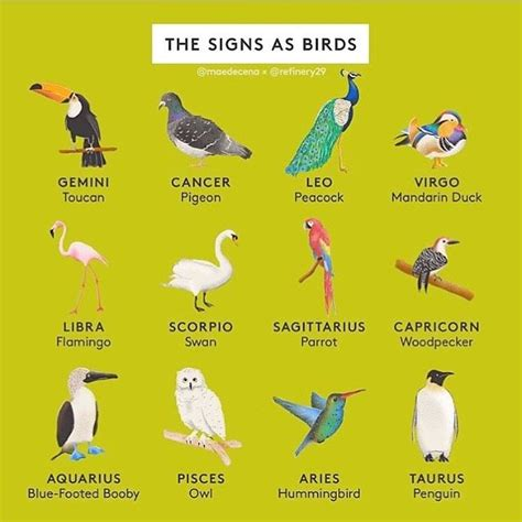Which bird are you? I'm a swan! (Repost @refinery29) This ...