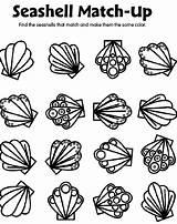 Seashell Coloring Pages Crayola Match Shells Sea Shell Printable Spring Preschool Seashells Matching Sheets Adults Gemerkt Von sketch template