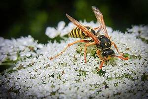 Was Essen Wespen : wespen und hornissen freiwillige feuerwehr vaterstetten ~ Frokenaadalensverden.com Haus und Dekorationen