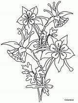 Columbine Drawings Flower Outline Visit Coloring sketch template