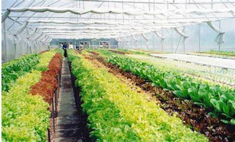 การปลูกพืชระบบไฮโดรโปนิกส์ (Hydroponics) - อาชีพพารวย