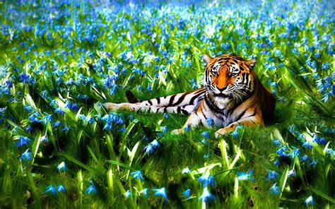 Cool 3d Animal Wallpapers - animal nature wallpaper 71 images