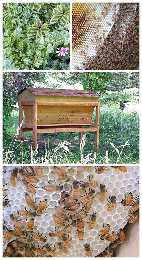 Top Bar Excluder - top bar hive enchanted living arts beekeeping