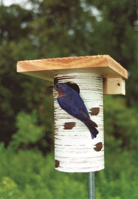 gilbertson bluebird and small bird house backyard bird lover