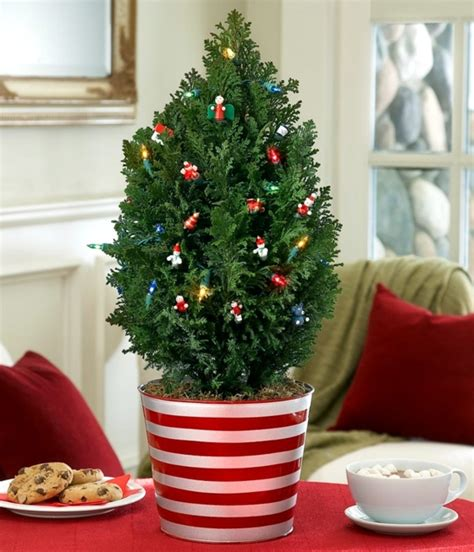christmas tree in pot the festive decor and beautiful