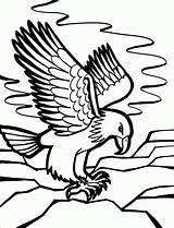 Coloring Pages Birds Eagle Name Knowing Kind Bird sketch template