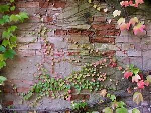 Gartenmauern Aus Naturstein : gartenmauer aus naturstein zweckm ige begrenzungslinie ~ Sanjose-hotels-ca.com Haus und Dekorationen