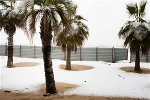 überwintern Von Palmen : palmen berwintern im freien so berleben die pflanzen ~ Michelbontemps.com Haus und Dekorationen