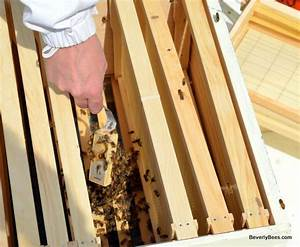 How To Install Package Bees In A Langstroth Hive
