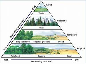 24 Rainforests U0026 Deserts Geography For 2019 U0026 Beyond