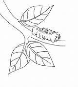 Caterpillar Coloring Pages Printable sketch template