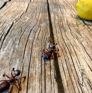 Ameisen Mit Flügel In Der Wohnung : villa schief was tun wenn ameisen sich mit dir die wohnung teilen wollen ~ Orissabook.com Haus und Dekorationen
