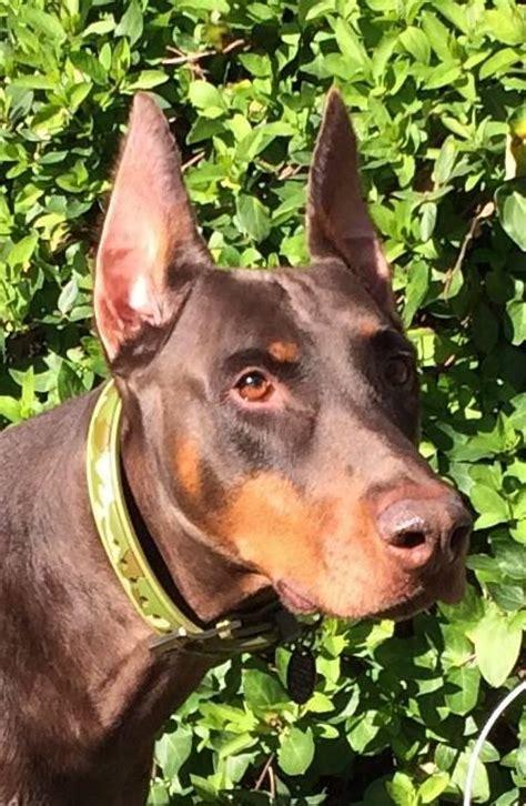 dogs named frodo  fido  seattle