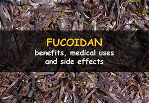 Fucoidan  Its Benefits  Side Effects And Uses