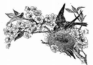 Blue Ridge Corner Images: Black and White Bird's Nest ...