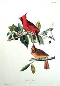 John James Audubon Cardinals