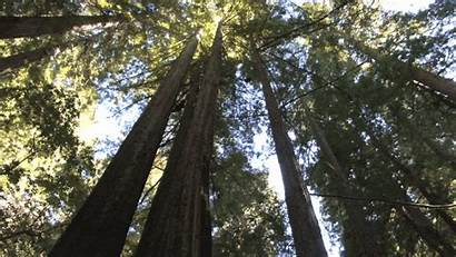 Carbon Dioxide Trees Absorb Less Forest