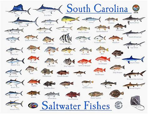 lowcountry outdoors lowcountry saltwater fishing report