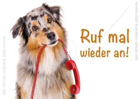 postkarte grusskarte australian shepherd hund mit