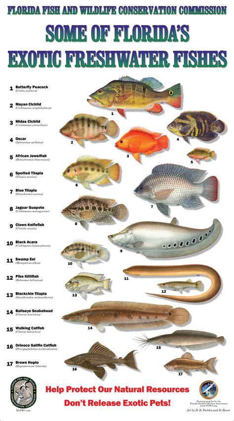pin  fish care
