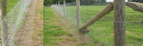 cattle fencing rabbits essex field fencingessex field fencing