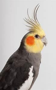 1042 Best Cotorras  Loros  Pericos   Parrots Images On