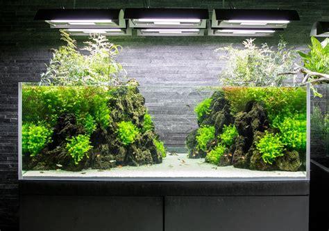 plantados acuaticos aquarium aquarium landscape diy