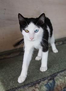 Weißer Wurm Katze : europa spaceboy schon mal so einen sch nen kater gesehen 09 12 zakynthos griechenland ~ Markanthonyermac.com Haus und Dekorationen