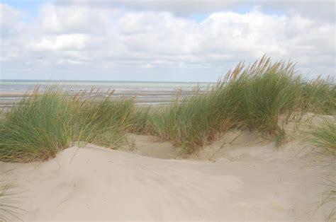 Panoramio  Photo Of Dünegras Beachgrass