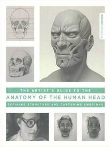 The Artist U0026 39 S Guide To The Anatomy Of The Human Head