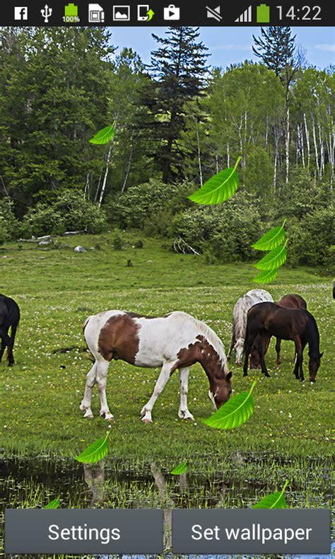 horses wallpapers apps google app
