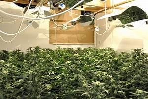 Indoor Grow Anleitung : how to build your indoor marijuana grow room grasscity magazine grasscity magazine ~ Eleganceandgraceweddings.com Haus und Dekorationen