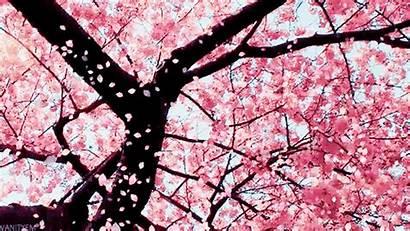 Falling Petals Tree Pink Blossom Cherry Flower