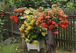 Sommerblumen Für Schatten : hausbautipps24 voraussetzungen f r eine ppige bl te von ~ Michelbontemps.com Haus und Dekorationen