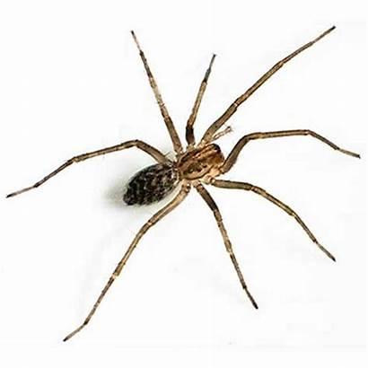Giant Spider Spiders Bites Bite Washington Types