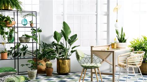 10 Indoor Plants That Are So Easy To Take Care Of