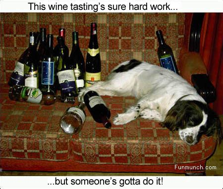 wine tasting funmunchcom