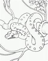 Snake Coloring Pages sketch template