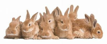 Rabbits Konijnen Rabbit Konijn Lop Bij Konijntjes