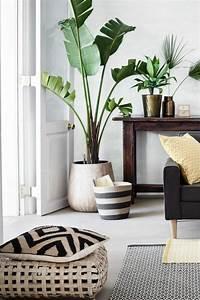 Pflanze Mit Großen Blättern : 6354 best dekoration decoration ideas deko ideen ~ Michelbontemps.com Haus und Dekorationen